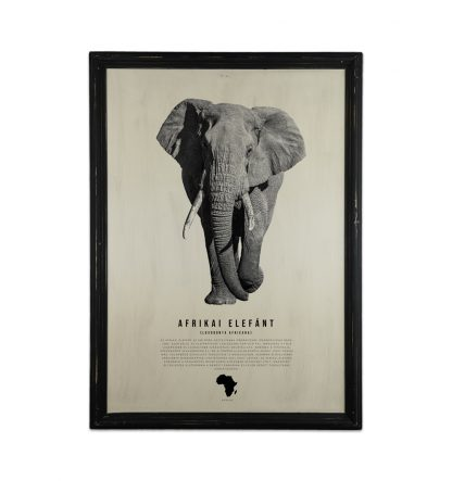 goodwood allatvilag sorozat afrikai elefant