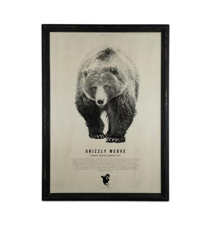 goodwood allatvilag sorozat grizzly medve